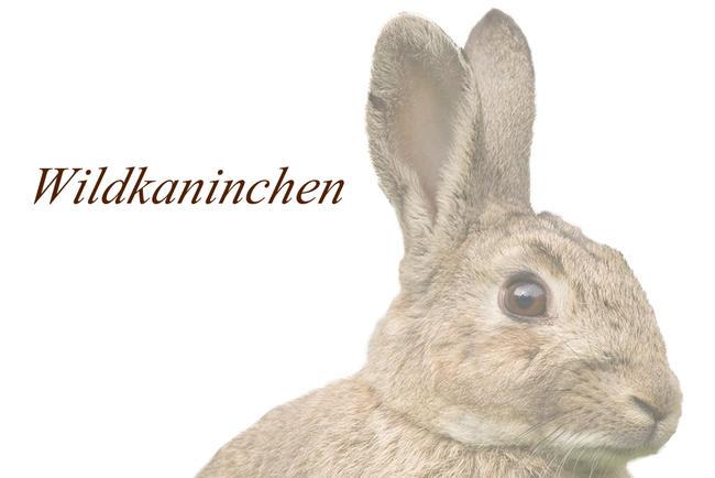Logo Kaninchen