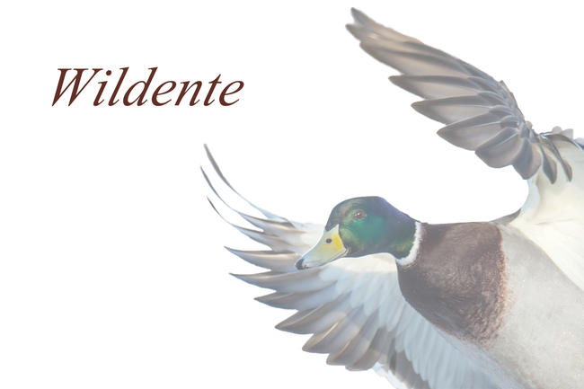 Logo Wildente