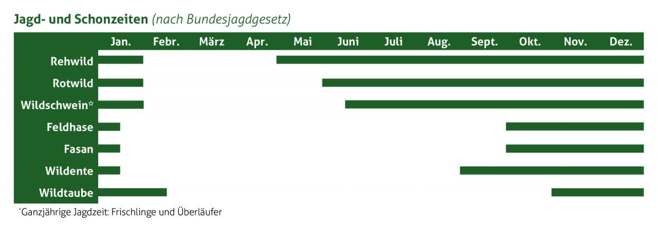 In welchen Monaten können Sie welches Wildbret frisch kaufen? (Quelle: DJV)