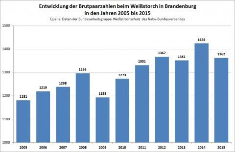 Entwicklung des Weißstorches in Brandenburg