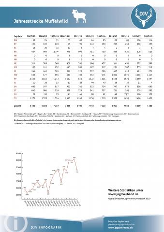 Muffelwild: Jagdstatistik 2007-2018