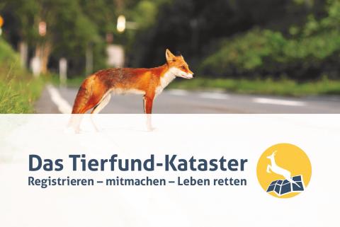Teaserbild für DJV-Broschüre zum Tierfund-Kataster
