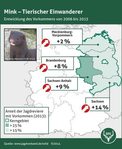 Mink - Entwicklung des Vorkommens 2006 bis 2013