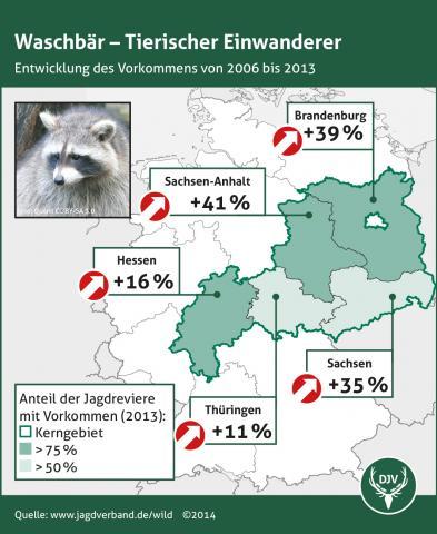 Waschbaer: Verbreitung 2006-2013