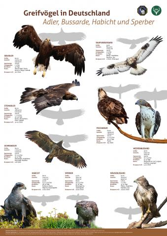 DJV DFO Poster Deutsche Greifvögel