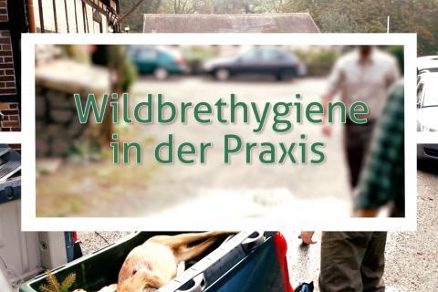 Wildbrethygiene-Videos