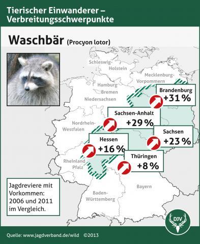 Grafik zur Verbreitung des Waschbären