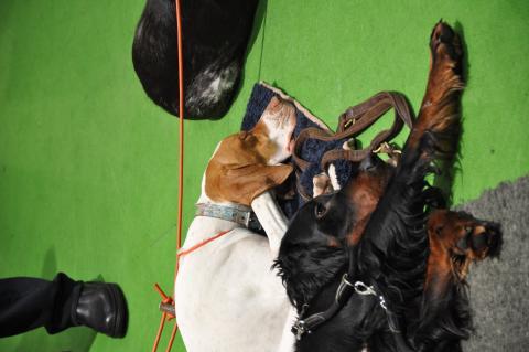 Entspannte Hunde IGW19