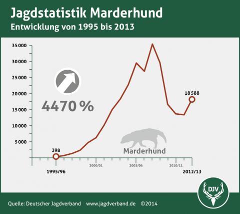 Marderhund: Jagdstatistik 1995-2013