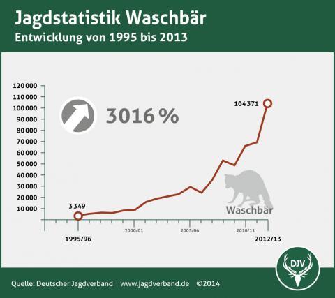 Jagdstatistik: Waschbär 1995 - 2013