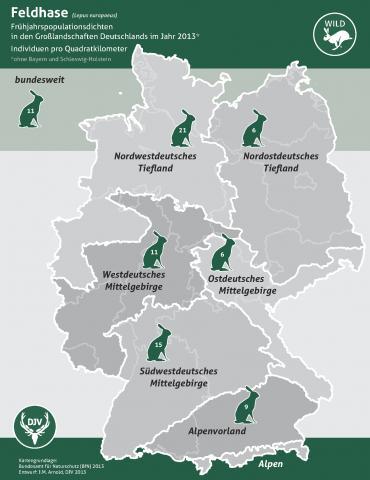 Feldhase (Frühjahrspopulationsdichte in Großlandschaften 2013)