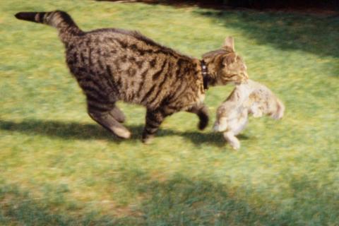 Katze mit Kaninchen