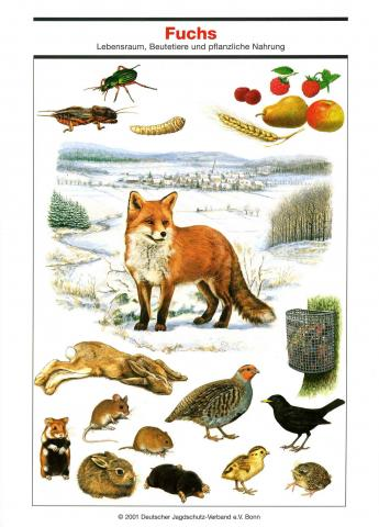 Poster Fuchs