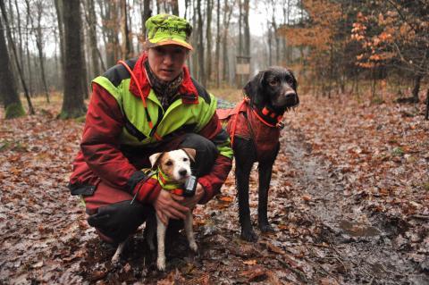 Sicherheit für Jagdhunde: signalfarbene Stichschutzweste, Halsband und Ortungsgerät sind bei Bewegungsjagden Standard.