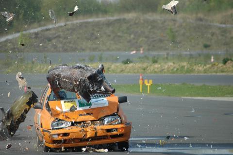 Wildunfall Crashtest des ADAC und DJV