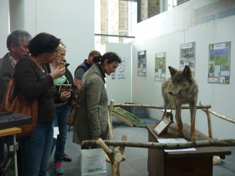 Besucher bestaunen das Wolfs-Präparat