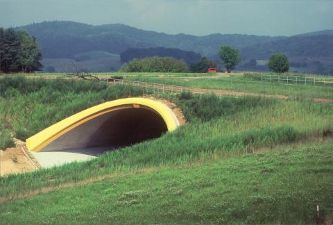 Lebensraumkorridor: Grünbrücke im Sommer