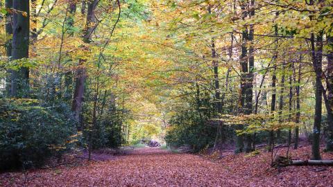 Weg durch einen Herbstwald