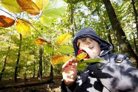Kind mit Lupe betrachtet Blätter