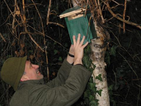 Nistkasten wird in Baum aufgehängt
