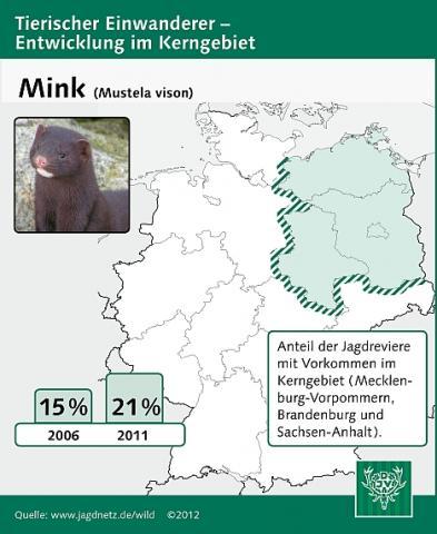 Mink: Entwicklung im Kerngebiet 2006-2011