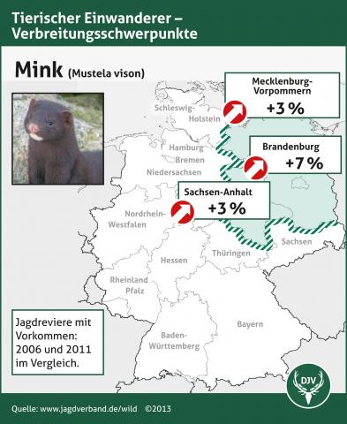 Mink: Verbreitung 2006-2011
