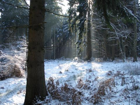 Winterwald mit Schnee